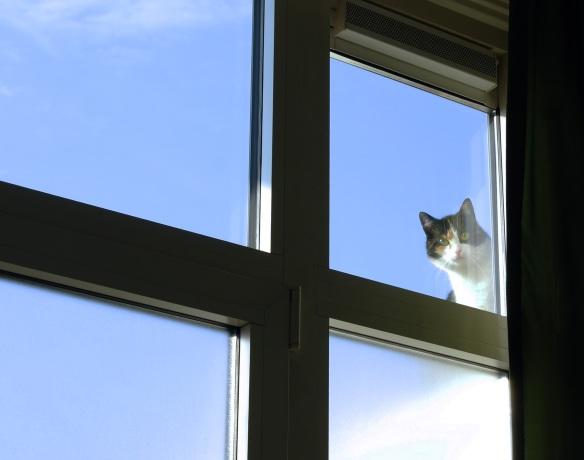 Kat voor raam