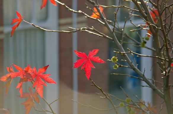 Vlammend rode bladeren