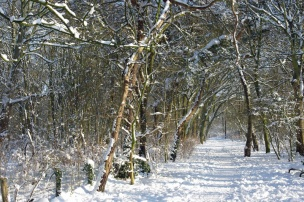 Bosjes van Poot12
