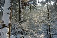 Bosjes van Poot2