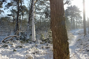 Bosjes van Poot7