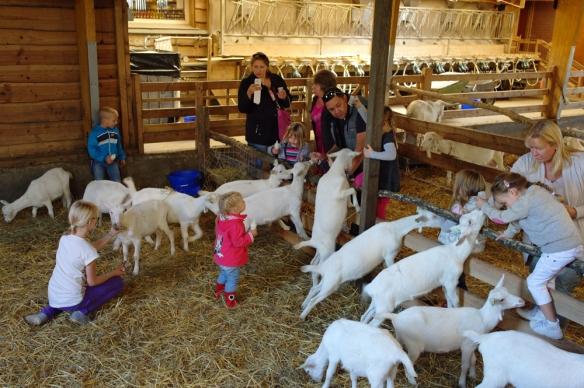 Geitenstal bij boerderij 't Geertje