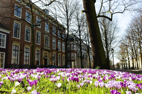 Krokussen op Lange Voorhout Den Haag