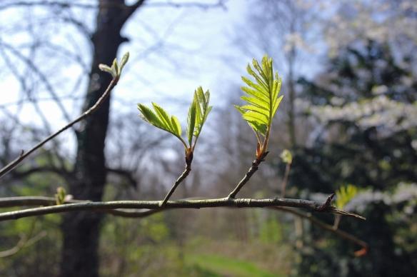 Sorghvliet voorjaar