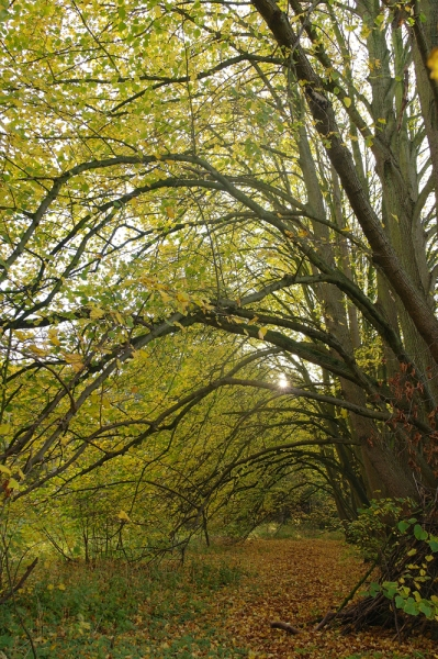 Sorghvliet herfst bomen