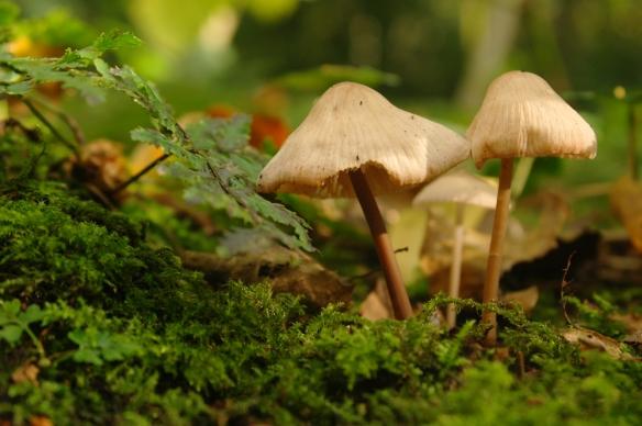 Sorghvliet herfst paddenstoelen