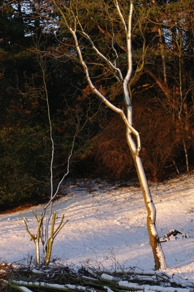 winterwandeling 6