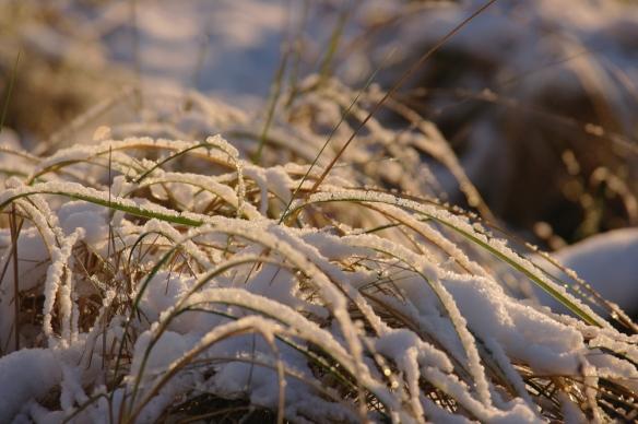 winterwandeling3