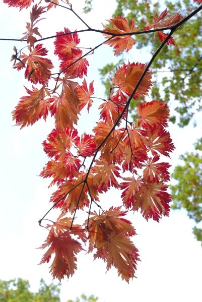 Japanse Tuin Clingendael