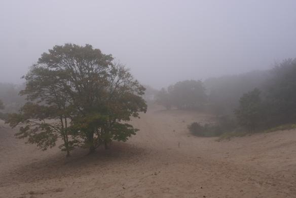 Westduinpark mist3