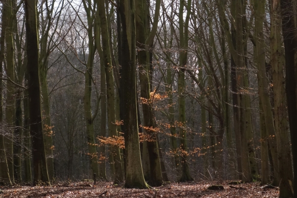 Haagse Bos winter 4
