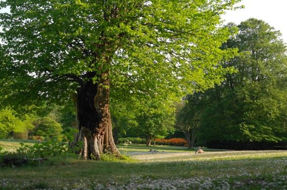 Japanse tuin Den Haag