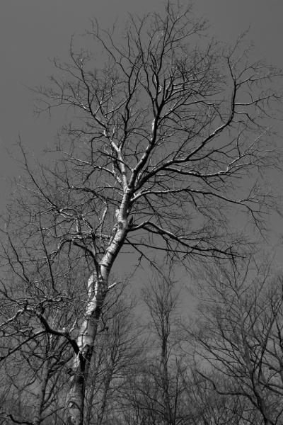 clingendael-zwart-wit