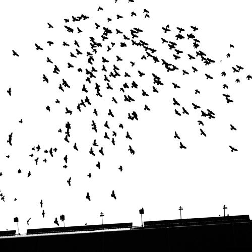 den-haag-cs-zwart-wit