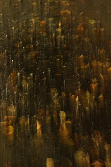 Natte blaadjes Binnenhof