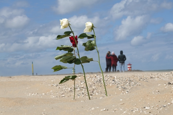 rozen op strand Scheveningen