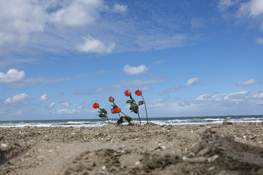 vijf rozen op het strand Scheveningen